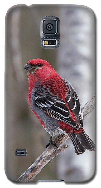 Pine Grosbeak Sax Zim Bog Galaxy S5 Case