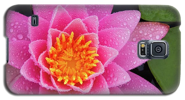 Pink Petals In The Rain  Galaxy S5 Case