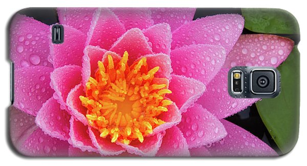 Pink Petals In The Rain  Galaxy S5 Case
