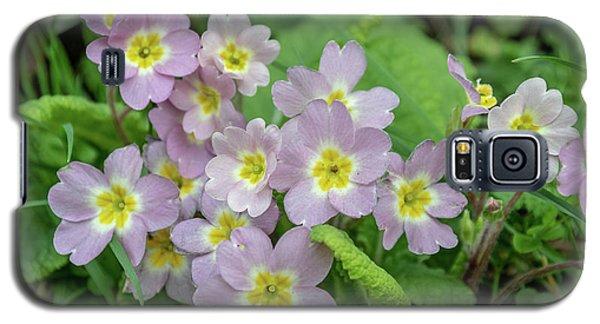 Pink Primroses In Devon Galaxy S5 Case