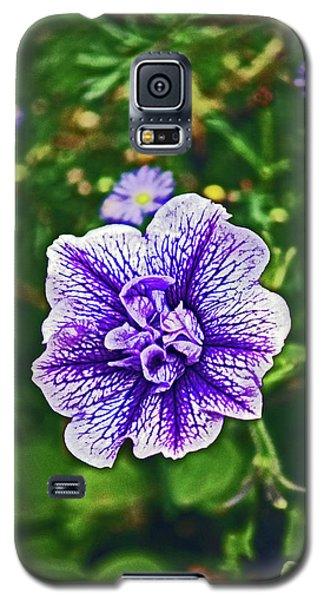 Pitlochry.  Purple Petunia. Galaxy S5 Case