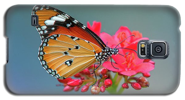 Plain Tiger Or African Monarch Butterfly Dthn0246 Galaxy S5 Case