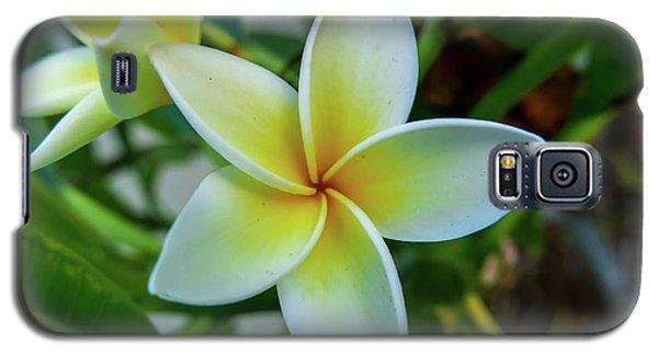 Plumeria In Bloom Galaxy S5 Case