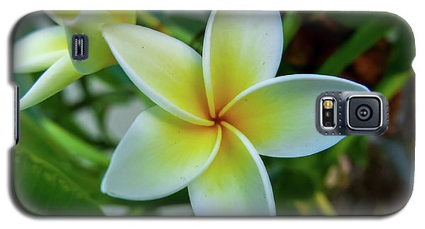 Plumeria In Bloom Galaxy S5 Case