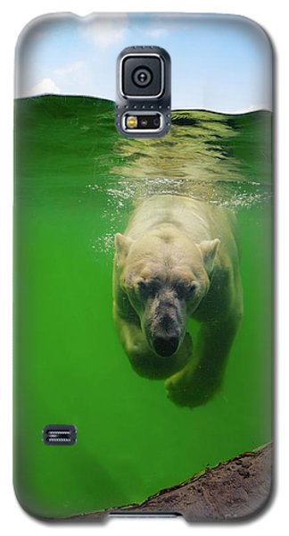 Polar Bear Underwater Galaxy S5 Case