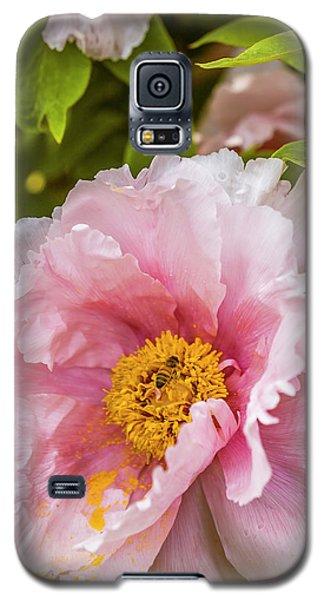 Pollen Trap Sprung Galaxy S5 Case