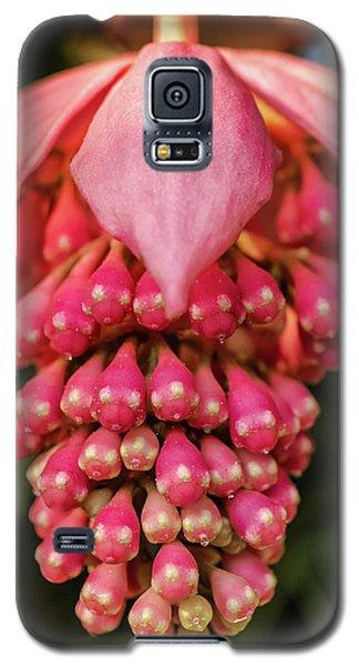 Pomegranate Flower Galaxy S5 Case