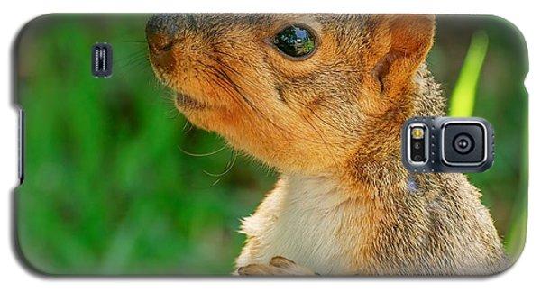 Pondering Squirrel Galaxy S5 Case