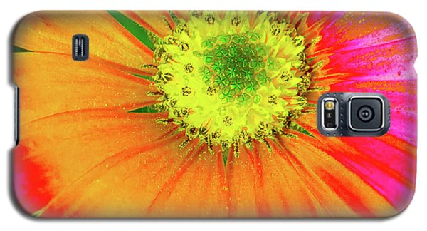 Pop Art Osteospermum 2 Galaxy S5 Case