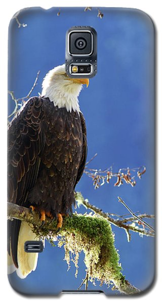 Portrait Of A Backlit Bald Eagle In Squamish Galaxy S5 Case