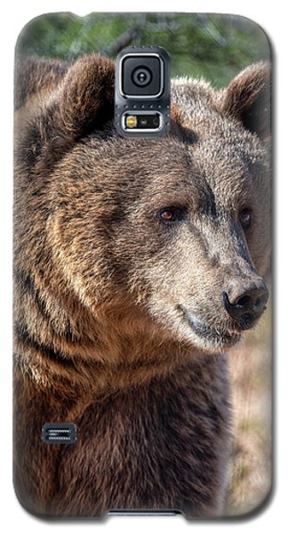 Portrait Of A Female Grizzly Bear Galaxy S5 Case