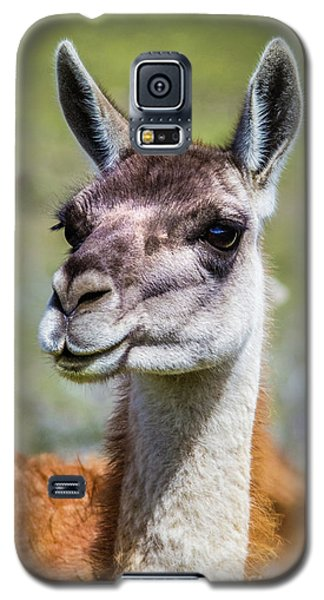 Portrait Of A Guanaco, Patagonia Galaxy S5 Case