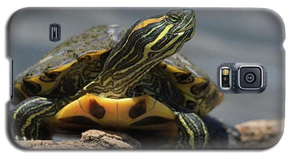 Portrait Of A Turtle Galaxy S5 Case