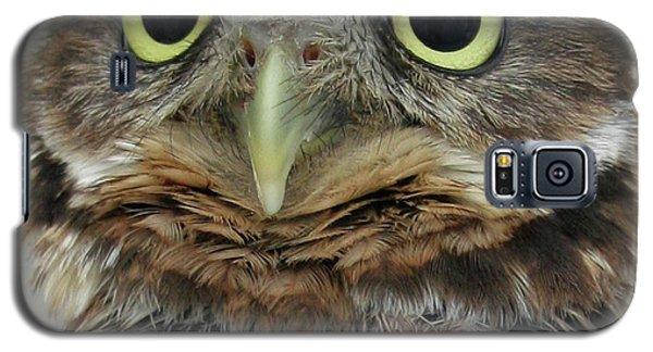 Portrait Of Burrowing Owl Galaxy S5 Case