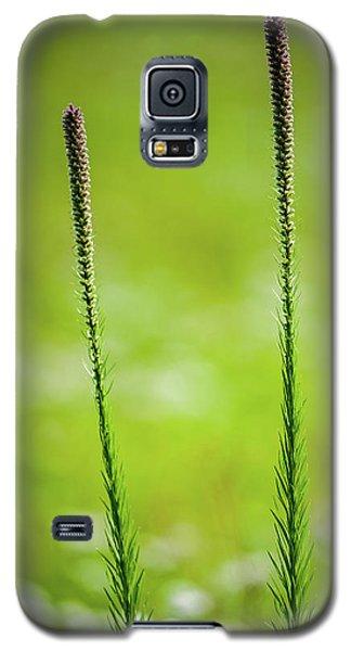 Prairie Blazing Star Galaxy S5 Case