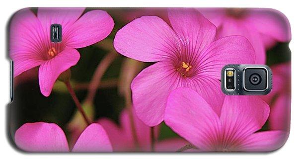 Pretty Pink Phlox Galaxy S5 Case