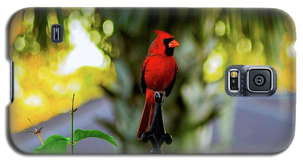 Proud Male Cardinal Galaxy S5 Case