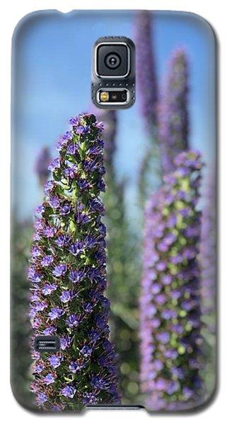 Purple Hyssop  Galaxy S5 Case