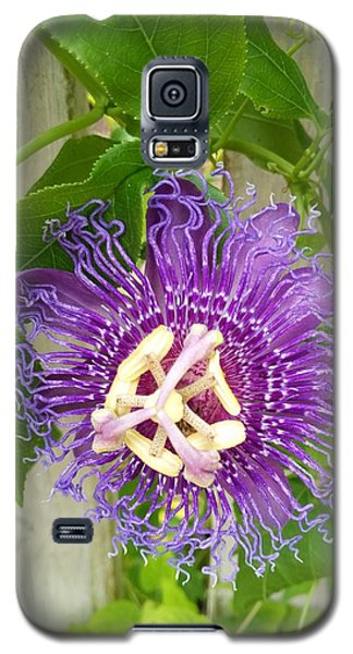 Purple Passionflower Galaxy S5 Case