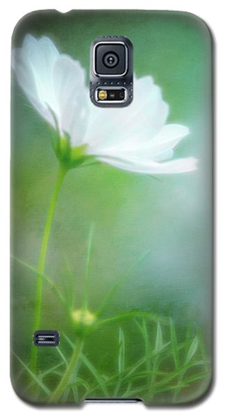 Radiant White Cosmos In The Evening Light Galaxy S5 Case