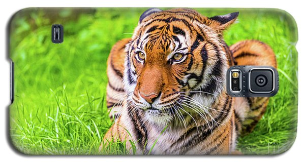 Ready To Pounce Galaxy S5 Case