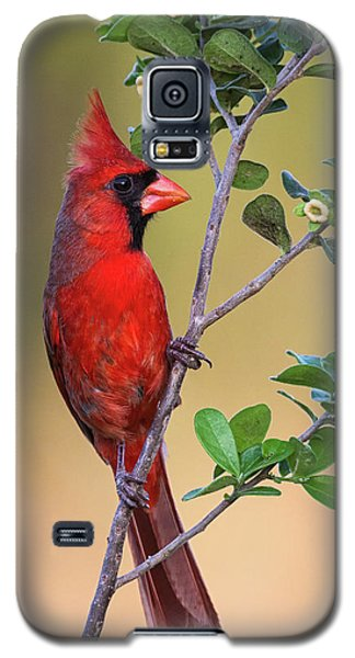 Red All Over Galaxy S5 Case