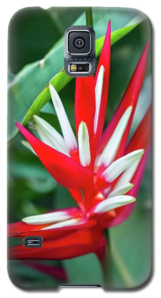 Red And White Birds Of Paradise Galaxy S5 Case