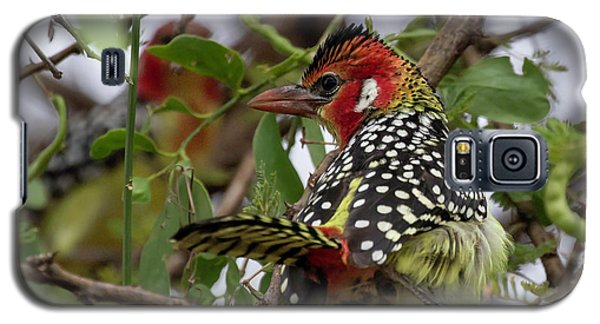 Red-and-yellow Barbet Galaxy S5 Case