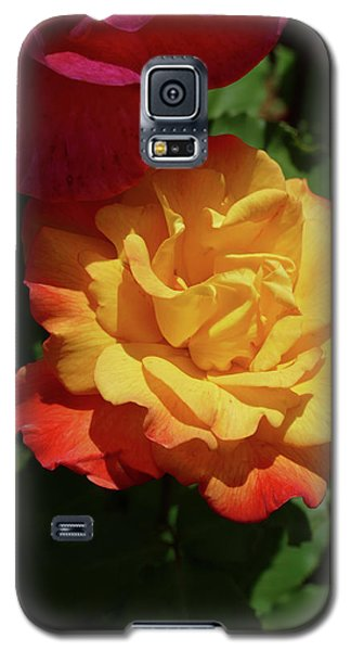 Red And Yellow Rio Samba Roses Galaxy S5 Case