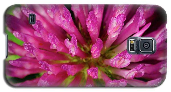 Red Clover Flower Galaxy S5 Case