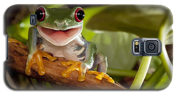 Branch Galaxy S5 Case - Red-eyed Tree Frog Smile by Linas  T