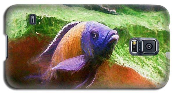 Red Fin Borleyi Cichlid Rising Galaxy S5 Case