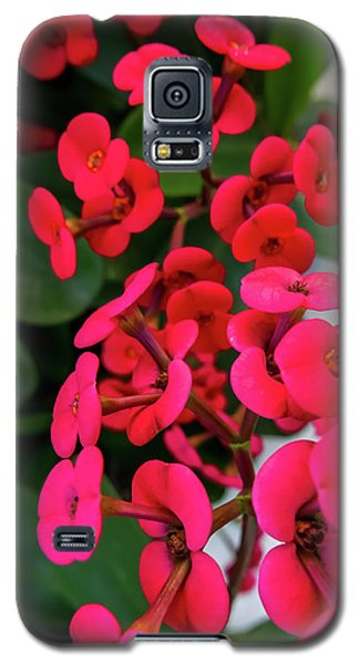Red Flowers In Bloom Galaxy S5 Case