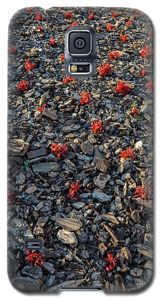Red Flowers Over Stones Galaxy S5 Case