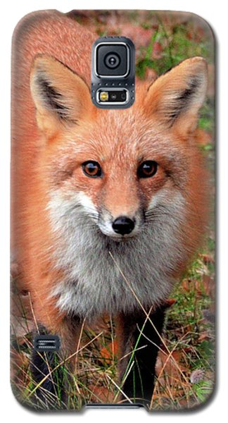 Red Fox Galaxy S5 Case