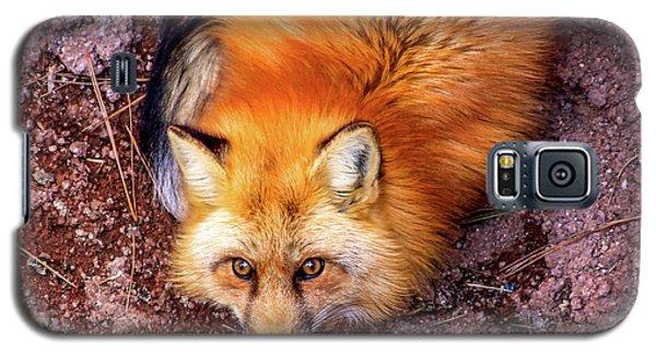Red Fox In Canyon, Arizona Galaxy S5 Case
