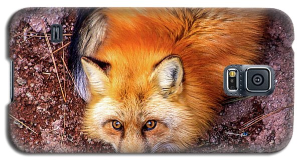 Red Fox In Canyon, Arizona Galaxy S5 Case