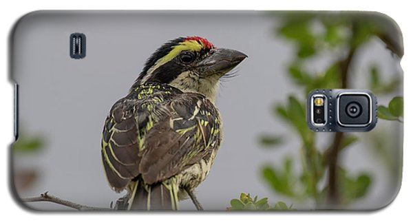 Red-fronted Barbet Galaxy S5 Case