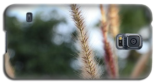 Red Grass - Pennisetum Setaceum 'rubrum' Galaxy S5 Case