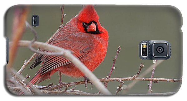Red In Winter Galaxy S5 Case