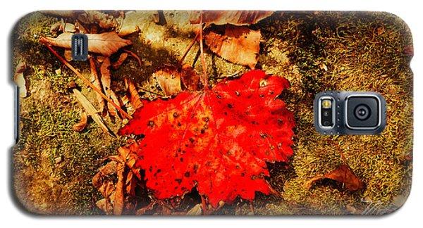 Red Leaf On Mossy Rock Galaxy S5 Case
