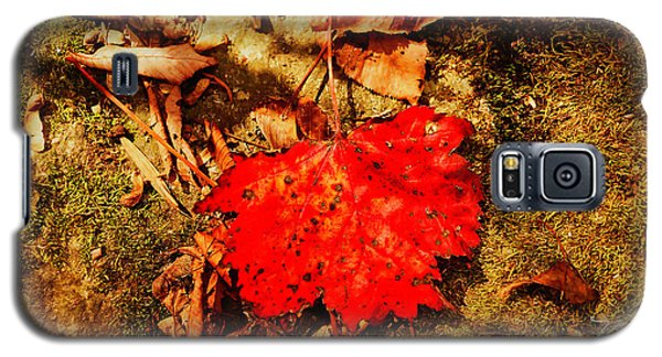 Red Leaf On Mossy Rock Galaxy S5 Case