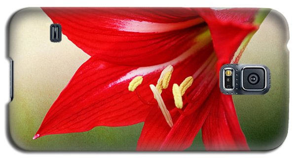 Red Lily Flower Galaxy S5 Case