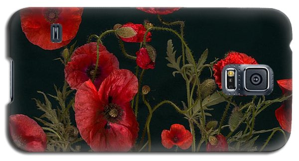 Red Poppies On Black Galaxy S5 Case