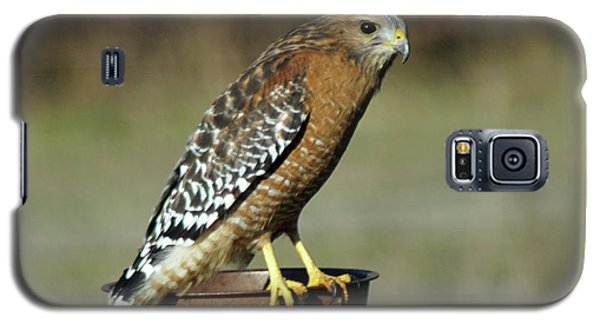 Galaxy S5 Case featuring the photograph Red-shouldered Hawk by Ben Upham III