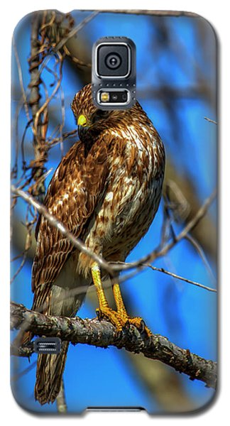 Red Shouldered Hawk Galaxy S5 Case