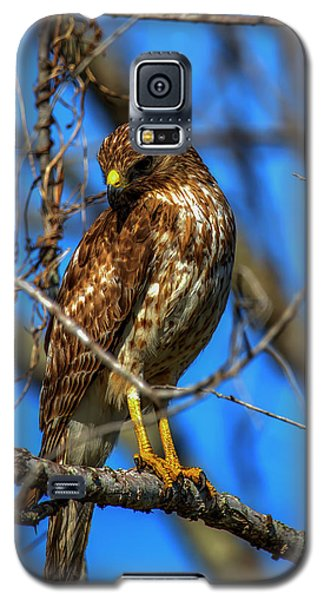 Red Shouldered Hawk Galaxy S5 Case