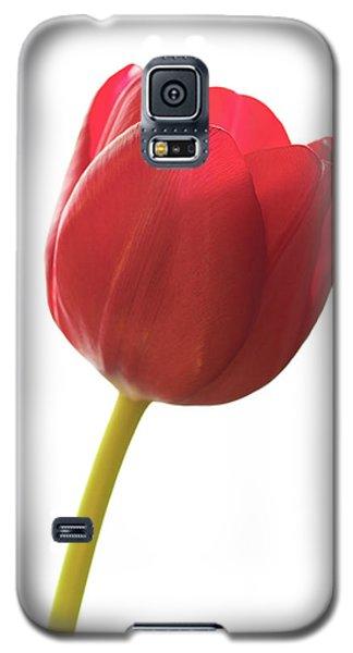 Red Tulip Galaxy S5 Case