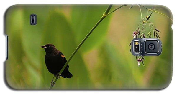Red-winged Blackbird On Alligator Flag Galaxy S5 Case