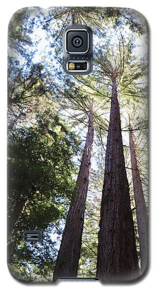 Redwoods, Blue Sky Galaxy S5 Case